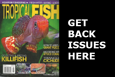 Tropical Fish Hobbyist Back Issues