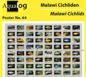 Malawi Cichlid Poster with 64 Color Photos ISBN 3931702499
