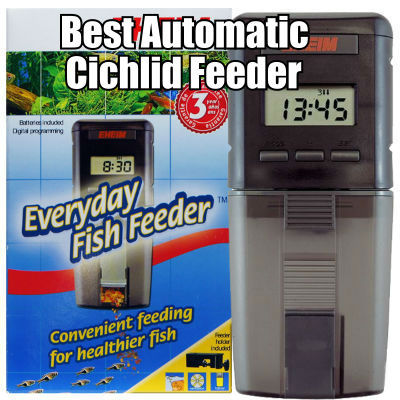 The Best Automatic Cichlid Feeder
