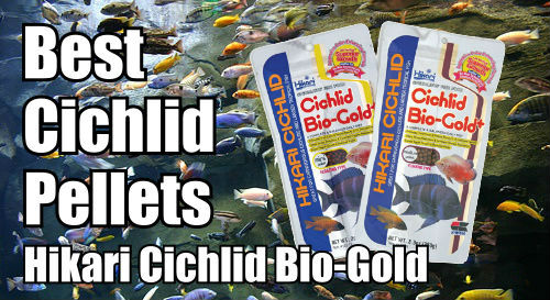 Hikari Bio Gold is perfect food for cichlids