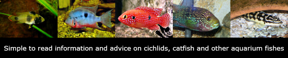Just Cichlids