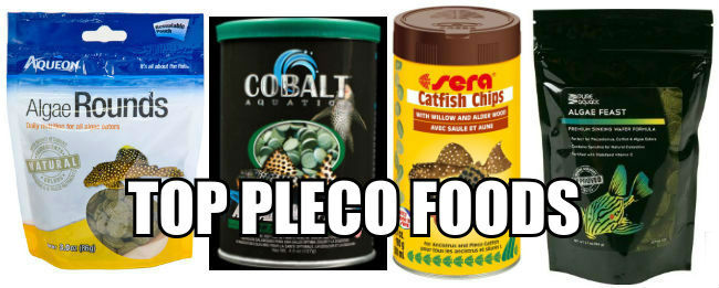 Top Plecostomus Fish Foods